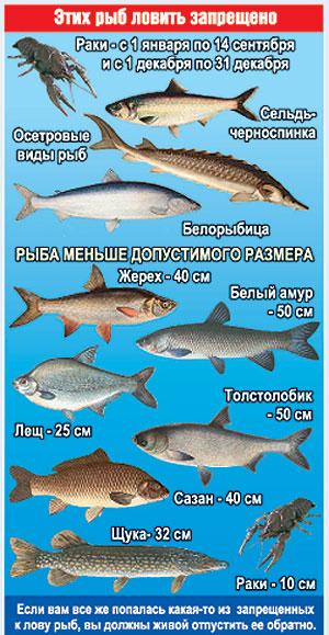 Какого размера ловить рыбу